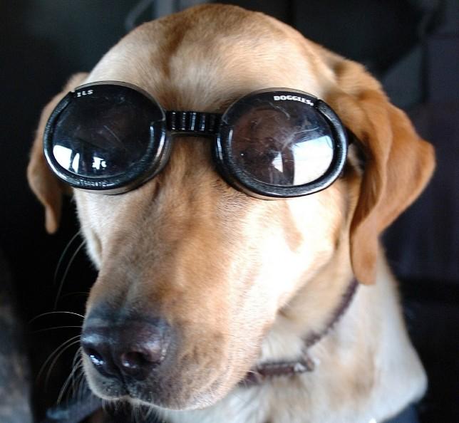 ラフティング メガネ