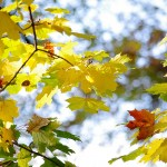 秋はお得にアウトドア