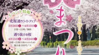 『長瀞 桜まつり』3月26日より開催!